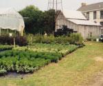 AnchorNursery-farmersmarket-Delaware